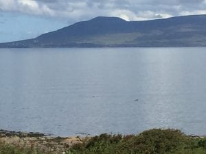 Ocean View Cottage Louisburgh Mayo, dolphins